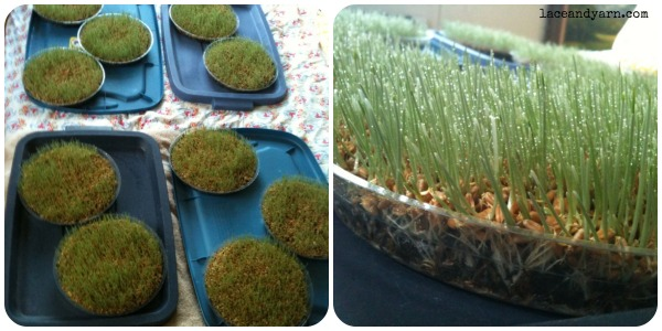 wheatgrass centerpiece